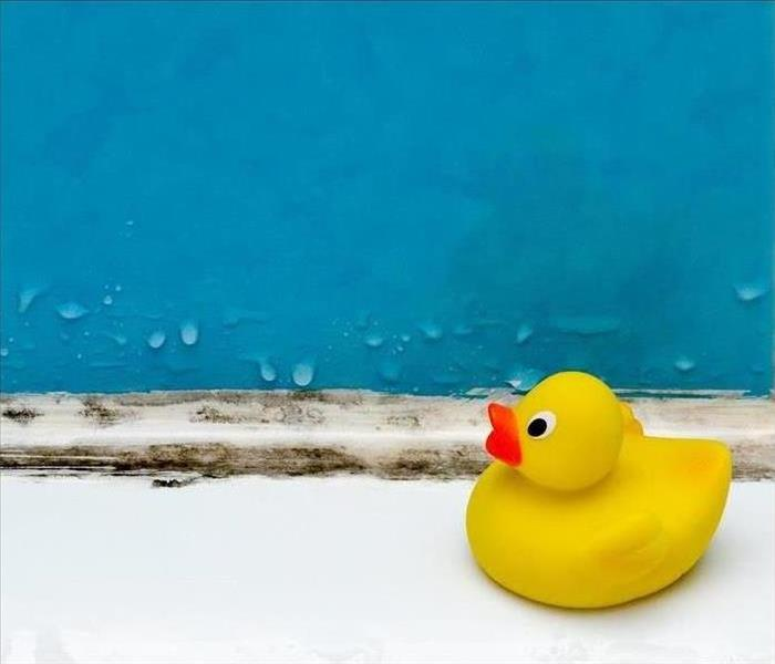 Yellow rubber duck on bath tub