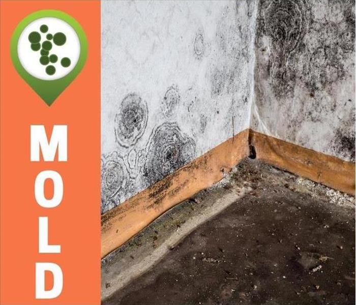 Mold pictured in a corner of room