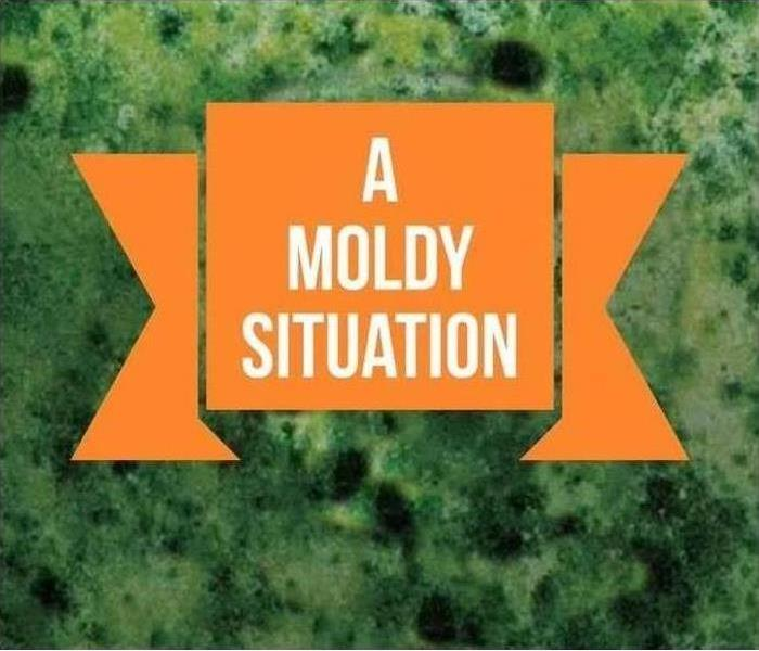 A Moldy Situation written on orange and green background