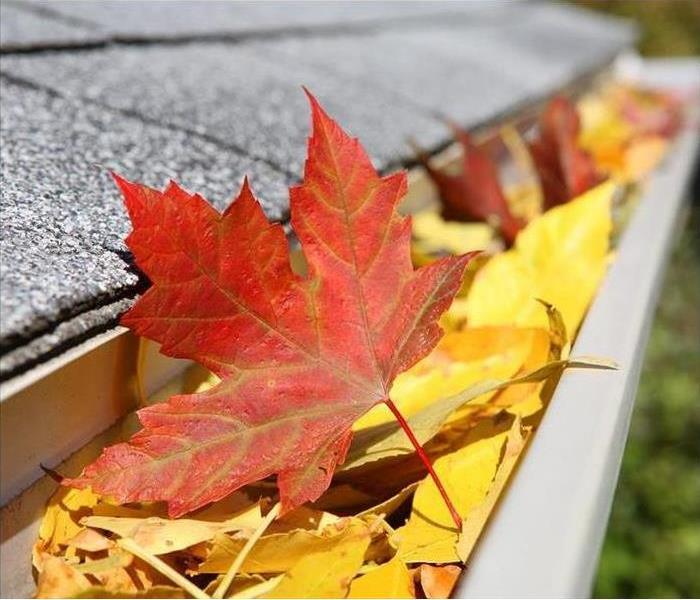 Yellow and red leafs in gutter